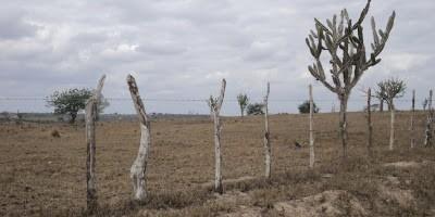 Seca causa prejuízos em 75% das lavouras de milho em Sergipe